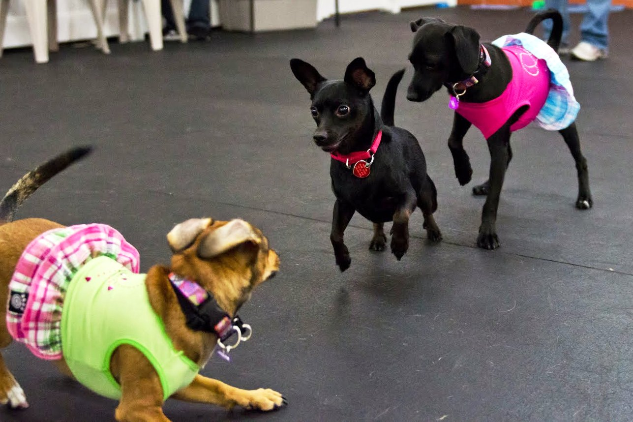 Best dog boarding los angeles puppy pet boarding for Dog kennels los angeles