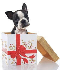 dog in gift box