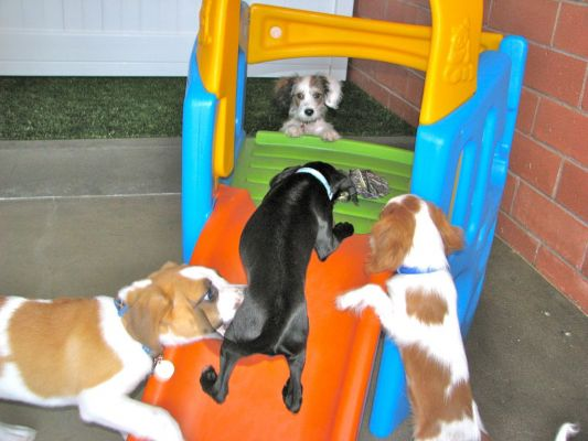 Dog & Puppy Training In The Los Angeles Area