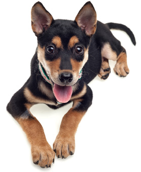 Dog puppy training in the los angeles area i said sit for Best dog boarding los angeles