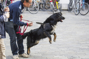 Dog Lunging on Leash